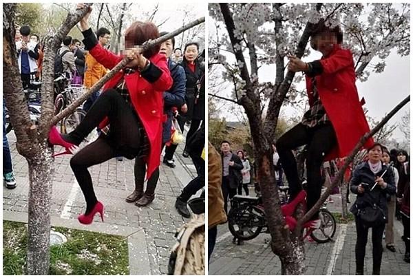Bị bắt vì đạp cây, tạo 'mưa' hoa anh đào chụp ảnh tự sướng - ảnh 2