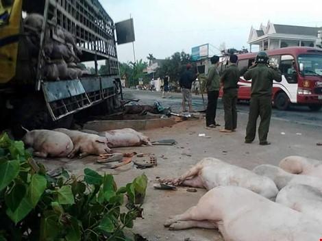 Chùm ảnh: Gần 100 con heo nằm chết la liệt sau vụ tai nạn - ảnh 3