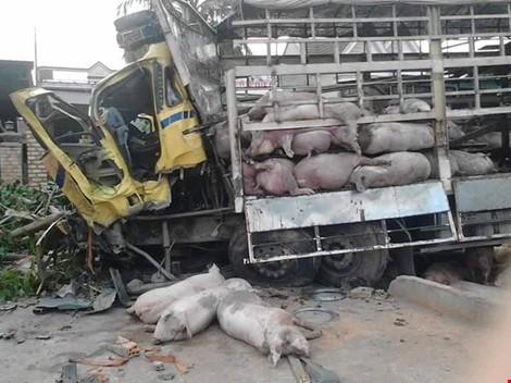 Chùm ảnh: Gần 100 con heo nằm chết la liệt sau vụ tai nạn - ảnh 6