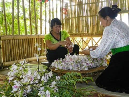 Tháng 4 đến Sốp Cộp mà ăn …hoa ban - ảnh 3