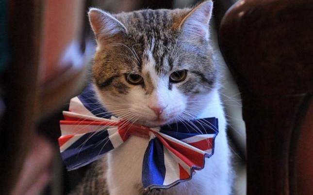 Bộ Ngoại giao Anh thuê mèo để bắt chuột - ảnh 1