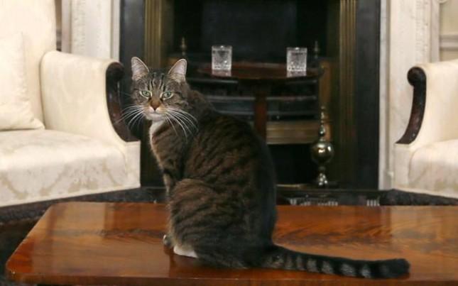 Bộ Ngoại giao Anh thuê mèo để bắt chuột - ảnh 2