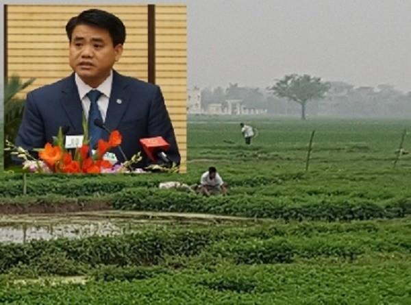 Chủ tịch Hà Nội phản hồi vụ rau ngậm chất siêu tăng trưởng - ảnh 1