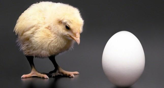 Đã tìm ra đáp án câu hỏi 'gà có trước hay trứng có trước' - ảnh 1