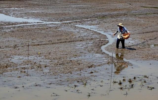 Nước về ĐBSCL không phải do Trung Quốc xả đập - ảnh 5