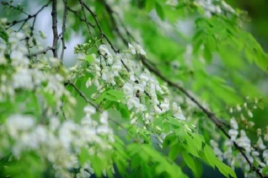 Dự báo thời tiết (5/4): Miền Bắc sáng có sương mù, ngày nắng nóng - ảnh 1