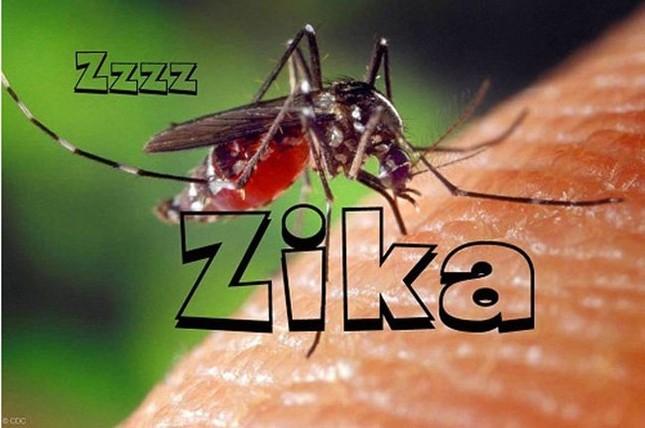 Phải làm gì khi phát hiện dương tính với Virus Zika? - ảnh 1
