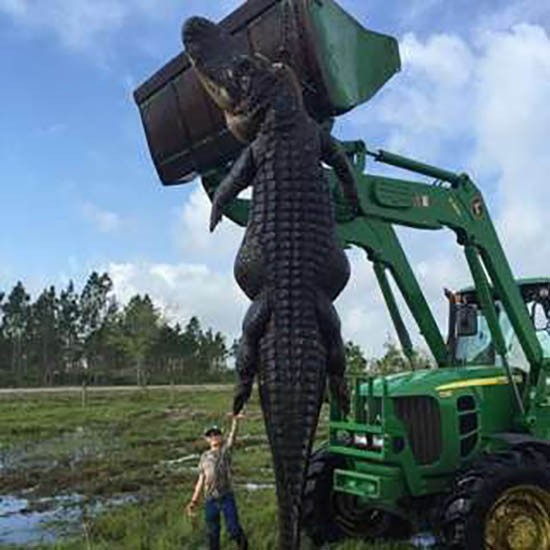 Thợ săn bắn hạ cá sấu khổng lồ ăn trộm gia súc - ảnh 1