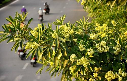 Những mùa hoa nếu bỏ lỡ bạn sẽ tiếc 'ngẩn ngơ' - ảnh 4