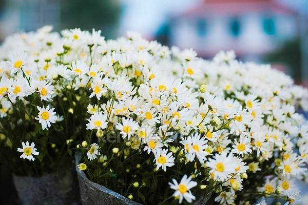 Những mùa hoa nếu bỏ lỡ bạn sẽ tiếc 'ngẩn ngơ' - ảnh 5