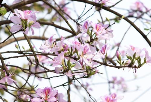 Những mùa hoa nếu bỏ lỡ bạn sẽ tiếc 'ngẩn ngơ' - ảnh 1