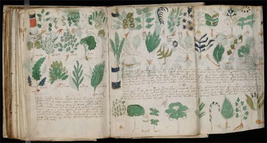 Bí ẩn cuốn sách Voynich - ảnh 2
