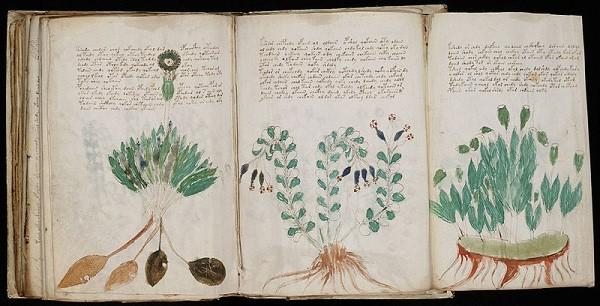 Bí ẩn cuốn sách Voynich - ảnh 3