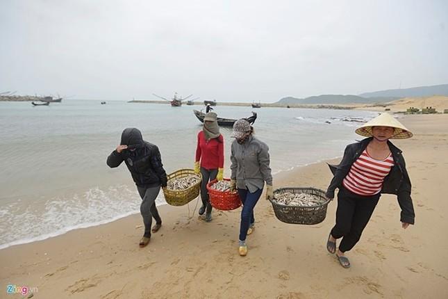 Nước biển 4 tỉnh miền Trung đạt chuẩn, hải sản an toàn - ảnh 1