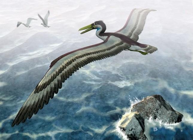 Loài chim khổng lồ từng thống trị bầu trời Nam Cực 50 triệu năm - ảnh 1