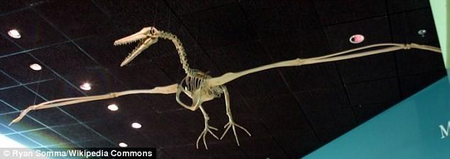 Loài chim khổng lồ từng thống trị bầu trời Nam Cực 50 triệu năm - ảnh 2