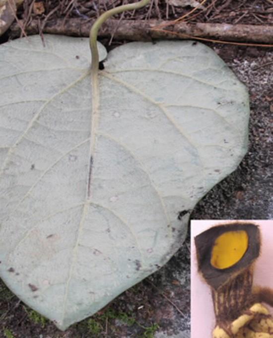 Phát hiện loài mới ở Lâm Đồng - ảnh 1