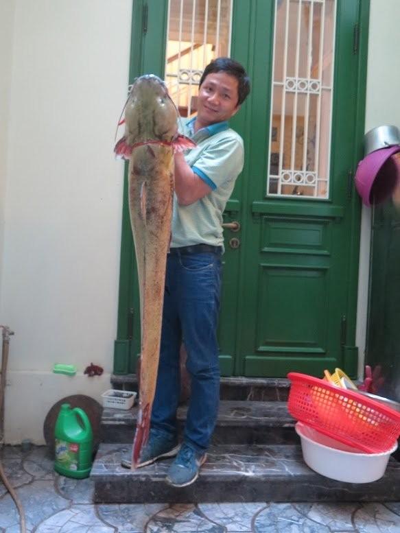 Xẻ thịt cá lăng sông Đà 1,5 mét: Đại gia làm bữa nhậu - ảnh 2