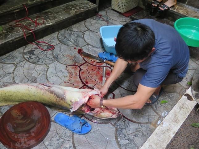 Xẻ thịt cá lăng sông Đà 1,5 mét: Đại gia làm bữa nhậu - ảnh 3