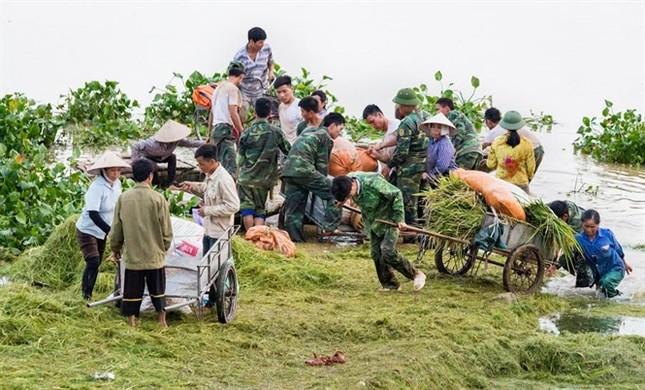 Ninh Bình huy động tổng lực giúp dân gặt lúa chìm trong biển nước - ảnh 3