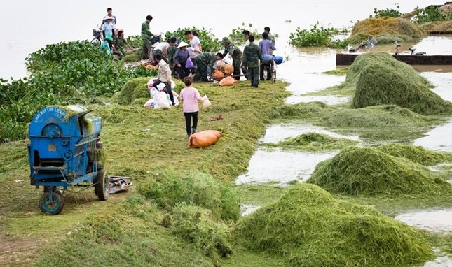 Ninh Bình huy động tổng lực giúp dân gặt lúa chìm trong biển nước - ảnh 1