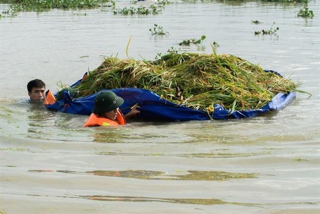 Ninh Bình huy động tổng lực giúp dân gặt lúa chìm trong biển nước - ảnh 5