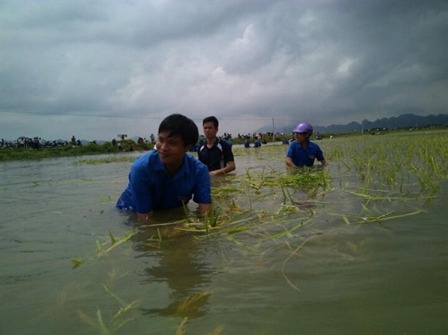 Ninh Bình huy động tổng lực giúp dân gặt lúa chìm trong biển nước - ảnh 7