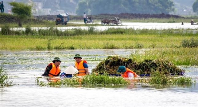 Ninh Bình huy động tổng lực giúp dân gặt lúa chìm trong biển nước - ảnh 10