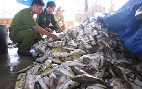 Giải pháp cấp bách ứng phó với cá chết bất thường ở miền Trung - ảnh 2