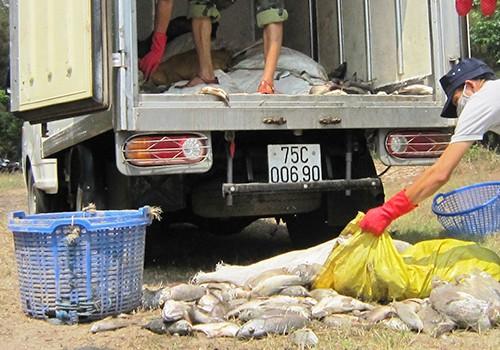 Nhiều tấn cá lồng và cá biển ở Huế tiếp tục chết - ảnh 1