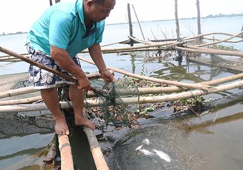Nhiều tấn cá lồng và cá biển ở Huế tiếp tục chết - ảnh 3