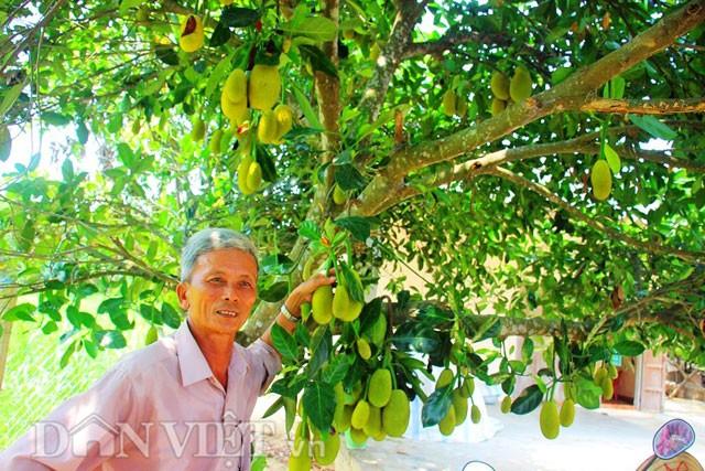 'Sướng đời' có được cây mít tố nữ 300 trái mọc chi chít tận gốc - ảnh 1