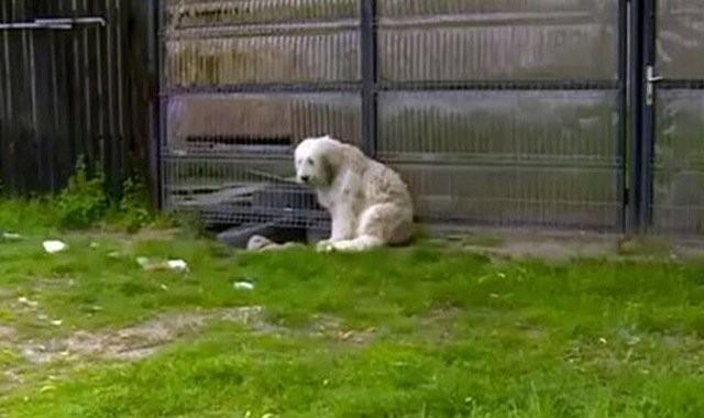 Chủ nhân qua đời đã 5 năm, chú chó trung thành vẫn đứng đợi cổng - ảnh 1