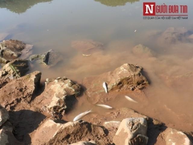 Thanh Hóa: Nước sông đổi màu, cá chết hàng loạt dạt vào bờ  - ảnh 1