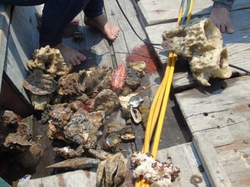 Xót xa rạn san hô lớn nhất Quảng Bình trở thành 'nghĩa địa cá' - ảnh 2