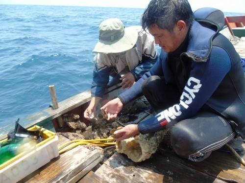 Xót xa rạn san hô lớn nhất Quảng Bình trở thành 'nghĩa địa cá' - ảnh 4