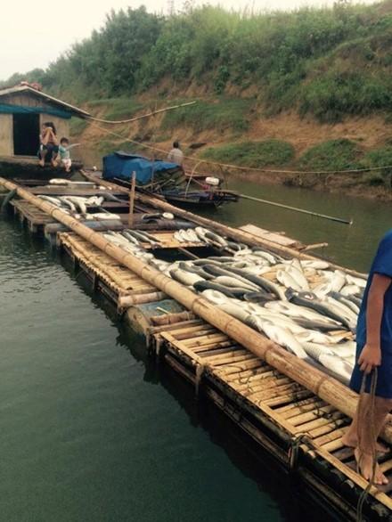 Cá chết trên sông Bưởi: Lợn ăn chết, người ăn đau bụng - ảnh 3