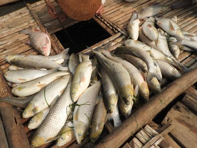 Vụ nước sông đổi màu, cá chết: