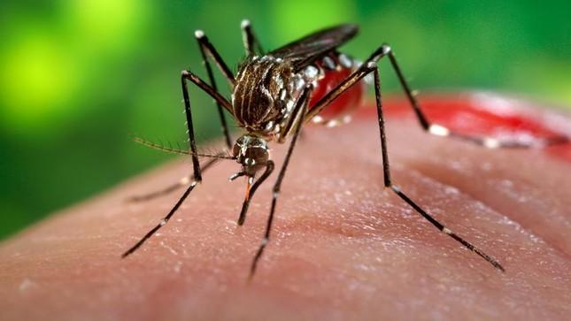 Cô gái Hàn Quốc 25 tuổi nghi nhiễm virus zika từ Việt Nam - ảnh 1