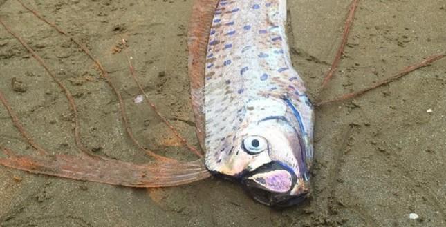 Phát hiện xác cá lạ dài hơn 2m trôi dạt vào bờ biển Hà Tĩnh - ảnh 1