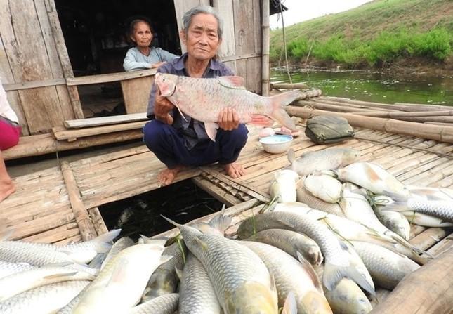 'Vụ cá chết ở sông Bưởi tuy nhỏ nhưng... nghiêm trọng'  - ảnh 1
