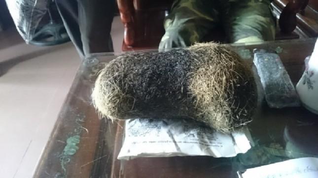 Phát hiện vật nghi cát lợn có giá hàng chục tỷ đồng ở Hà Nam - ảnh 1