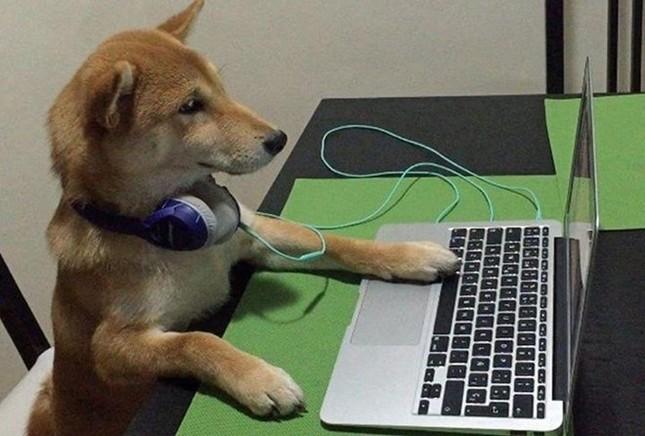 Chó Shiba gây sốt với dáng ngồi xem tivi giống hệt con người - ảnh 3