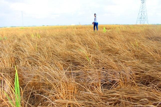 Nỗi đau hạ nguồn: Liệu cơ chế hợp tác có 'cứu' được sông Mekong? - ảnh 1