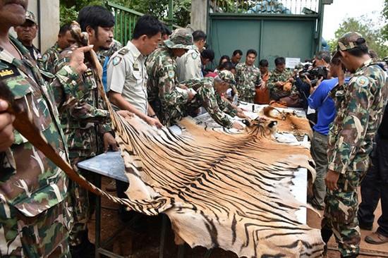 Phát hiện thêm 20 lọ chứa xác hổ non ở chùa Thái Lan - ảnh 2