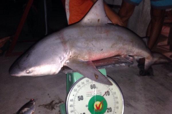 Chuyện lạ: Bắt được cá mập ở sông Vàm Cỏ - ảnh 1