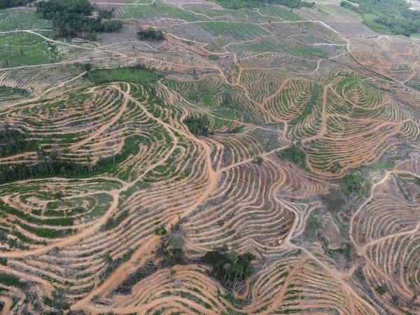 Báo động tình trạng ngân hàng 'tiếp tay' cho nạn phá rừng - ảnh 1