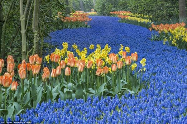 Những điểm đến đẹp nhất thế giới vào mùa xuân - anh 1