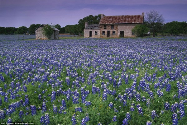 Những điểm đến đẹp nhất thế giới vào mùa xuân - anh 13