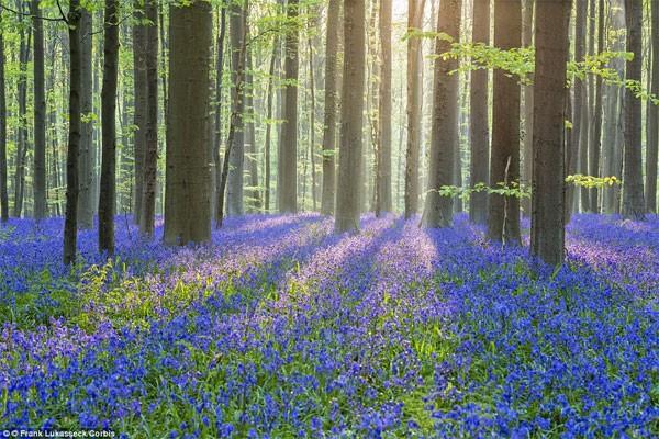 Những điểm đến đẹp nhất thế giới vào mùa xuân - anh 4